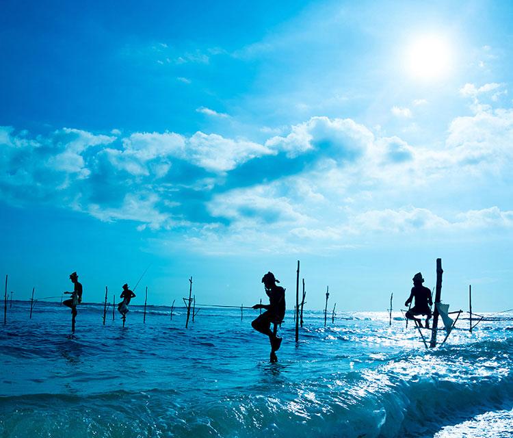 Stilt Fishing in Southern Coast Sri Lanka